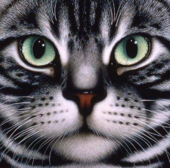Diamond Painting Artibalta - Cats Face
