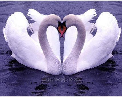 Diamond Embroidery/ Diamond Painting -  Swan love