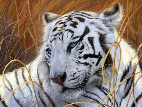 Diamond Painting Artibalta - White Tiger