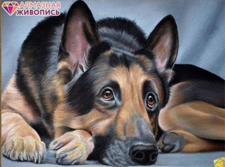 Diamond Painting Artibalta - Sheepdog