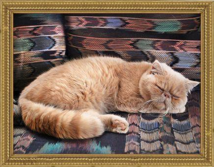 Diamond Painting Artibalta - Persian Cat