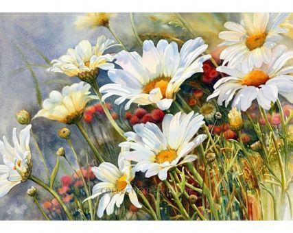 Diamond Embroidery/ Diamond Painting - Field camomiles