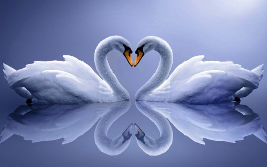 Diamond Painting Artibalta - White Swan