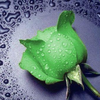 Diamond Painting Artibalta - Green Rose
