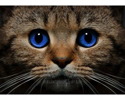 Diamond Embroidery/ Diamond Painting - Blue-eyed cat