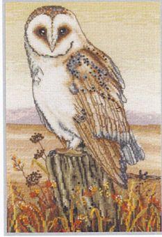 Anchor - Owl Horizon