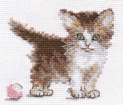 Alisa - Little Kitty