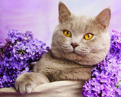 Diamond Painting Artibalta - The cat