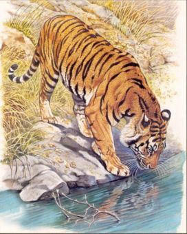 Diamond Painting Artibalta - Tiger near the River