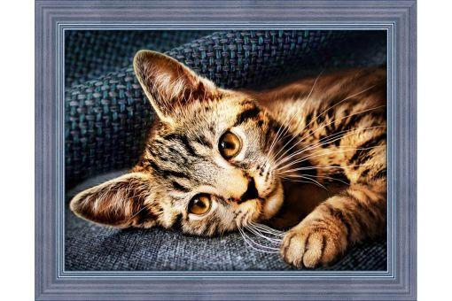 Diamond Painting Artibalta - CAT BARSIK