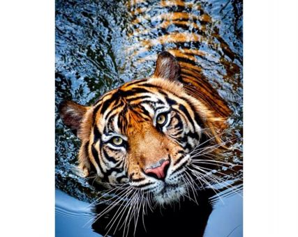 Diamond Embroidery/ Diamond Painting - Tiger