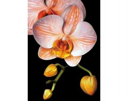 Diamond Embroidery/ Diamond Painting - Graceful orchid