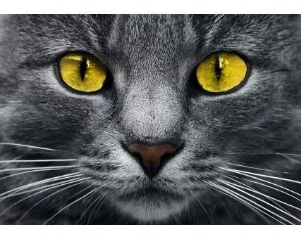Diamond Embroidery/ Diamond Painting - Yellow eyes