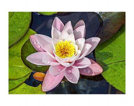 Diamond Embroidery/ Diamond Painting - Magic lotus