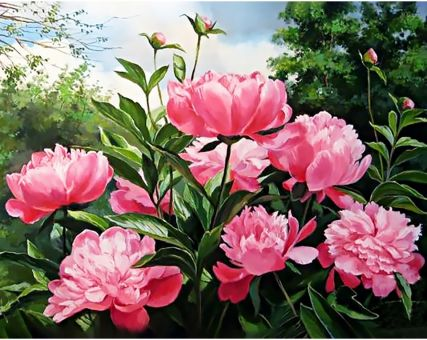 Diamond Embroidery/ Diamond Painting - Peony colour