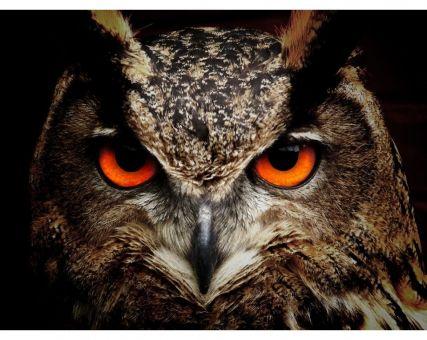 Diamond Embroidery/ Diamond Painting - Owl
