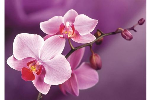Diamond Painting Wizardi - BRANCH OF ORCHIDS