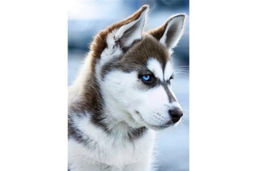 Diamond Painting Wizardi - SNOW DOG