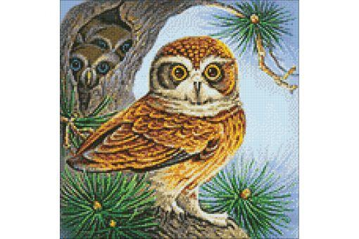 Diamond Painting Wizardi - OWL AND OWLETS