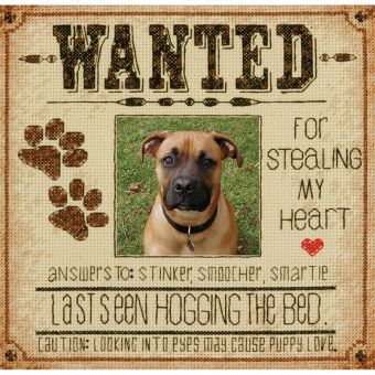 Dimensions - Dog Wanted - Hund gesucht!