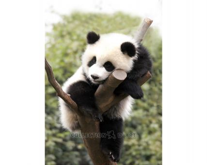 Diamond Embroidery / Diamond Painting - Tired panda