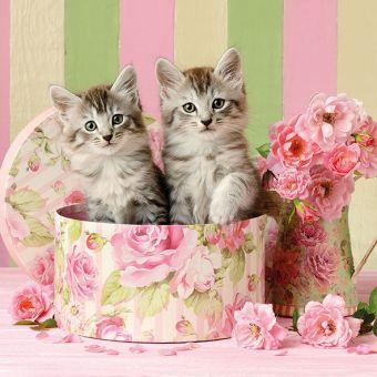 Ambiente Servietten - Katzen in der Box