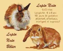 Luc Création - Les Lapins Nains
