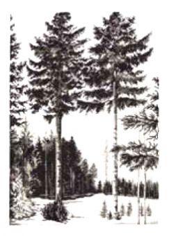 Permin Of Copenhagen - Bäume Grafik