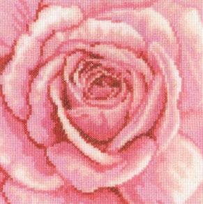 RTO - Pink Rose