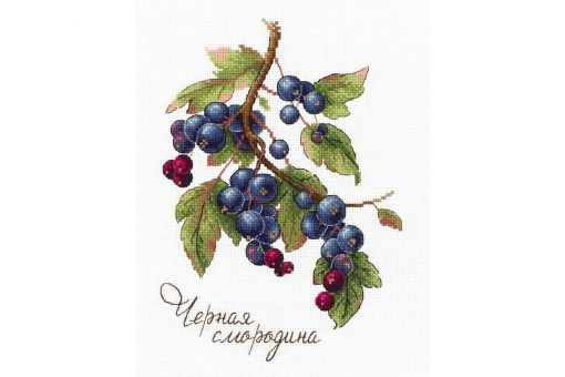 MP Studia - GIFTS OF NATURE. BLACK CURRANT