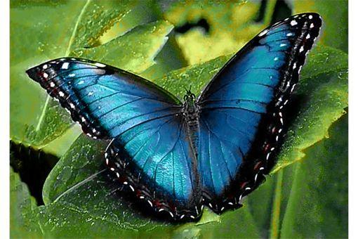 Diamond Painting Wizardi - BLUE MORPHO