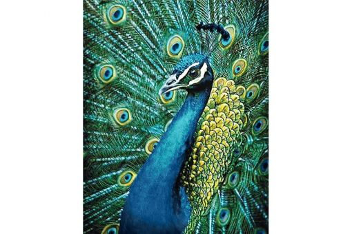 Diamond Painting Wizardi - PEACOCK