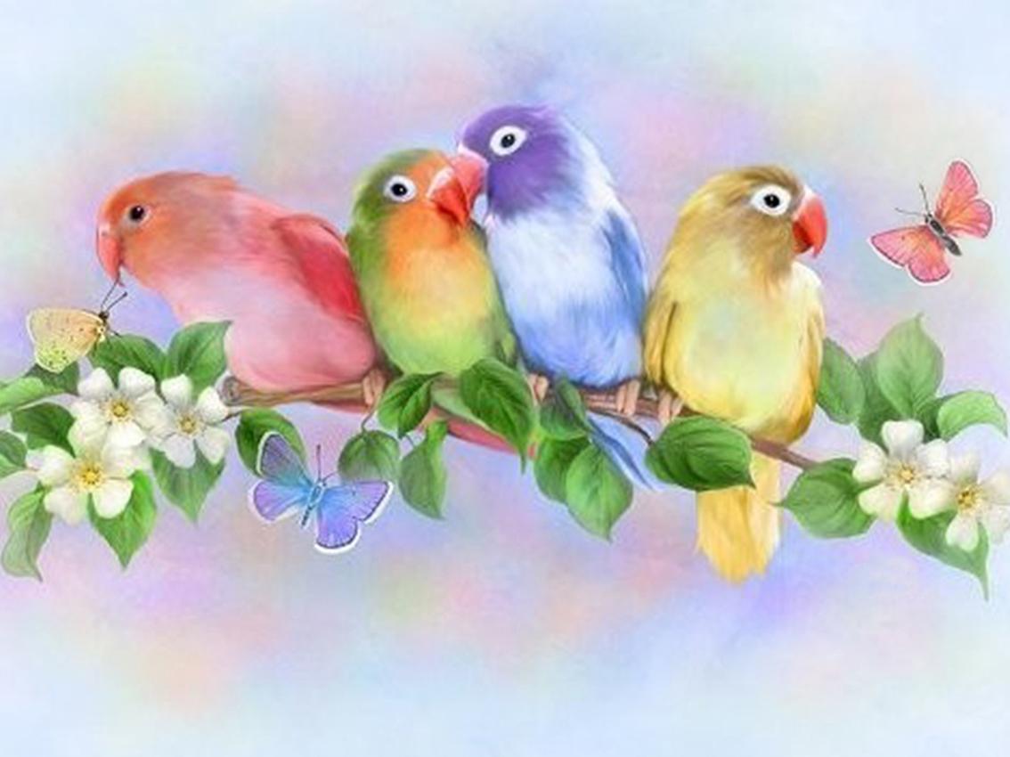 Картинки для детей красивые птички